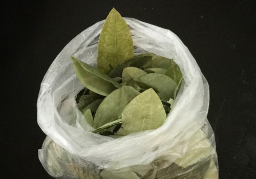 Coca Leaves Bought From A Street Vendor | Aguas Calientes, Peru