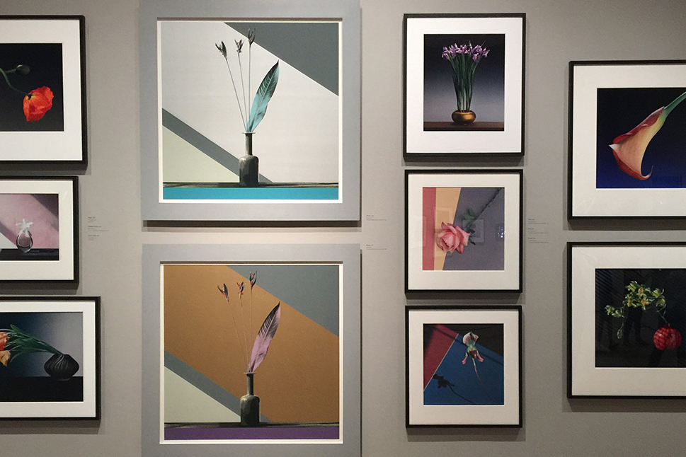 Mapplethorpe's Flower Series At Los Angeles County Museum Of Art | Los Angeles, California
