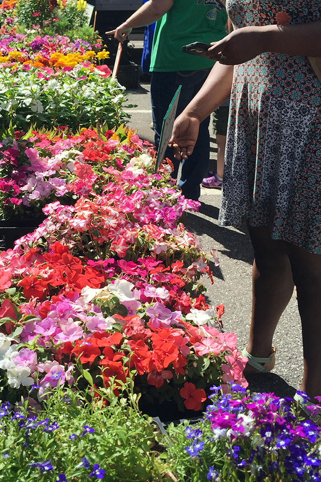 Flowers at Baltimore's Farmer Market | Baltimore, Maryland