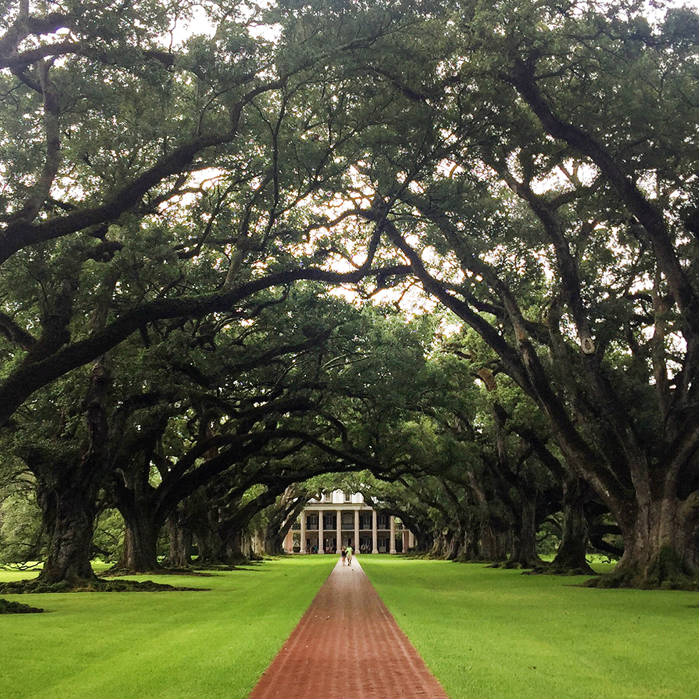 Oak Alley Plantation | Vacherie, Louisiana